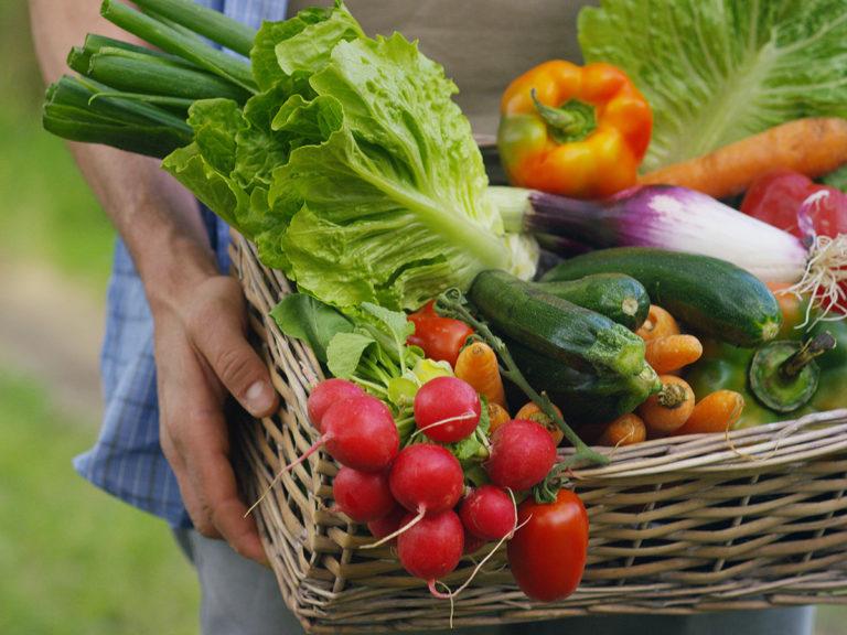 Rewe PETZ Obst und Gemuese